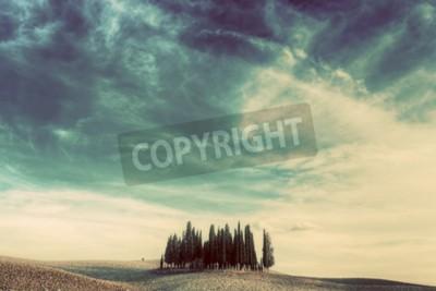 Quadro Cypress sul campo in Toscana, Italia al tramonto. Paesaggio toscano in vintage, retro umore