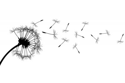 Quadro Dandelion silhouette