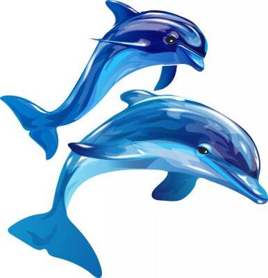 Quadro delfini bianchi