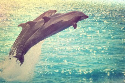 Quadro delfini che saltano