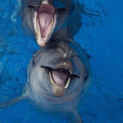 Quadro Delfino sorridente