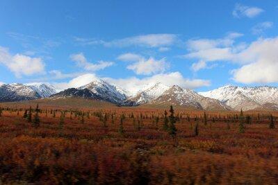 Quadro Denali National Park