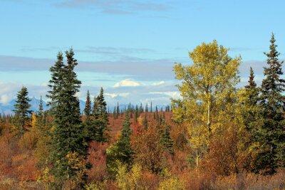 Quadro Denali National Park in autunno