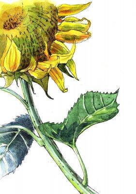 Quadro di semi di girasole, acquarello