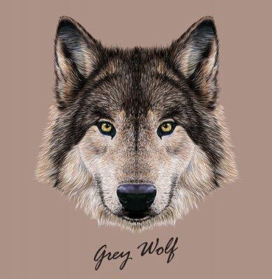 Quadro Digital illustrazione vettoriale ritratto di un lupo.