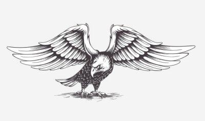 Quadro Disegnato a mano dettagliata Aquila. Vettore.