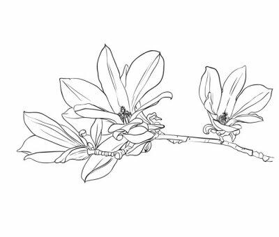 Quadro Disegno a mano fiori di magnolia.