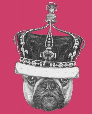 Quadro Disegno originale di Bulldog francese con corona. Isolato su sfondo colorato