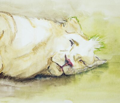 Quadro Dormire leone. La tecnica tamponando vicino ai bordi dà un effetto soft focus dovuto alla rugosità superficiale alterata della carta.