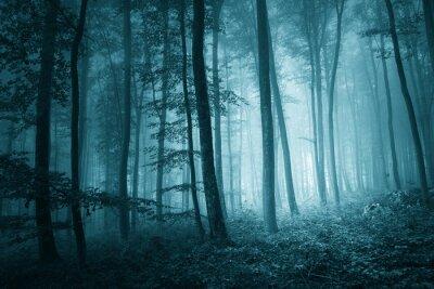 Quadro Dreamy mystic blue color foggy forest