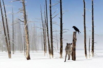 Quadro Due secondi da vivere - Wolf e Raven