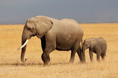 Quadro Elefante africano con vitello, Amboseli National Park