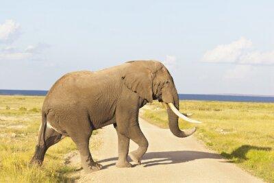 Quadro Elefante africano in Kenya