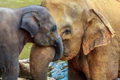 Quadro elefante e elefantino