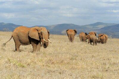 Quadro Elefante nel parco nazionale del Kenya