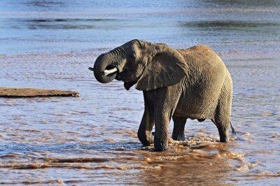 Quadro Elefanti africani nella savana