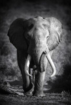 Quadro Elephant Bull (lavorazione artistica)
