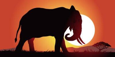 Quadro Elephant-couche de soleil