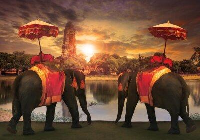 Quadro elephant dressing with thai kingdom tradition accessories standi
