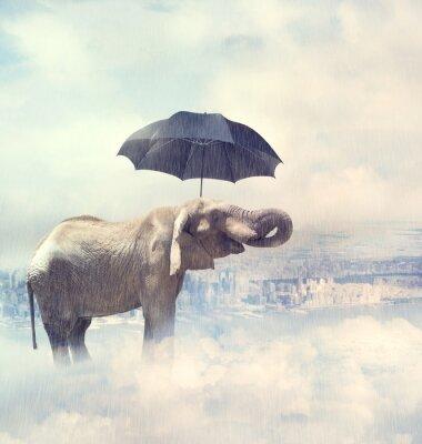 Quadro Elephant godendo la pioggia avobe la città sulle nuvole