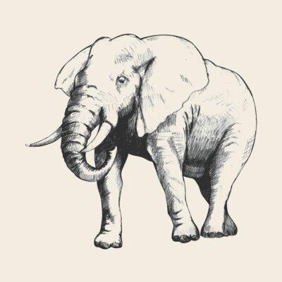 Quadro Elephant Sketch