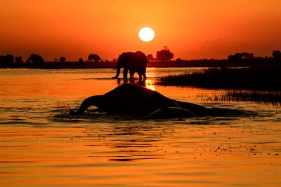 Quadro Elephant tramonto