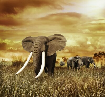 Quadro Elephants At Sunset
