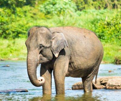 Quadro Elephatnt