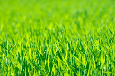 Quadro Erba verde