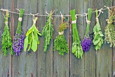 Quadro erbe aromatiche