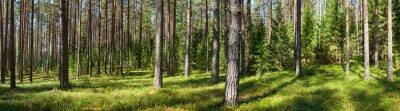 Quadro Estate panorama boschivo