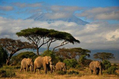Quadro Famiglia di elefanti in fronte del Monte. Kilimanjaro