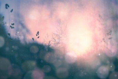 Quadro Fantasy tramonto bokeh sfondo sfocato prato