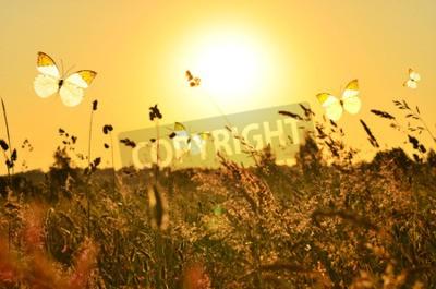 Quadro Farfalla e prato di estate