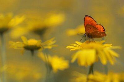 Quadro farfalla in giardino