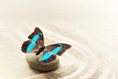 Quadro Farfalla Prepona Laerte sulla sabbia