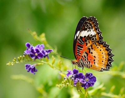 Quadro Farfalla su un fiore viola