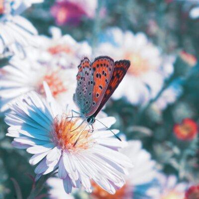 Quadro Farfalla sul fiore