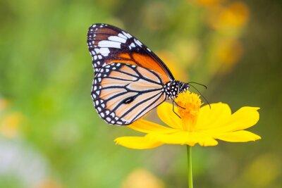 Quadro Farfalle e fiori