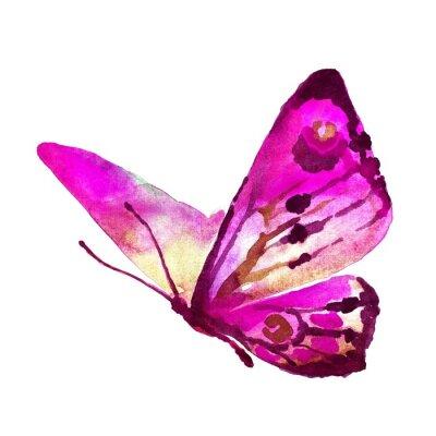 Quadro farfalle progettazione
