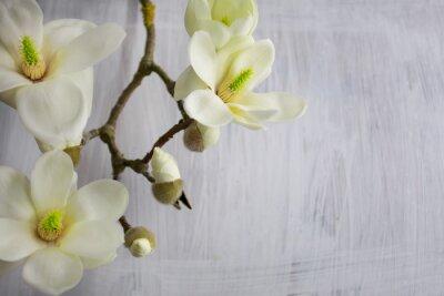 Quadro Fiore di Magnolia in fiore