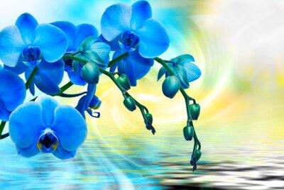 Quadro fiore di orchidea da vicino