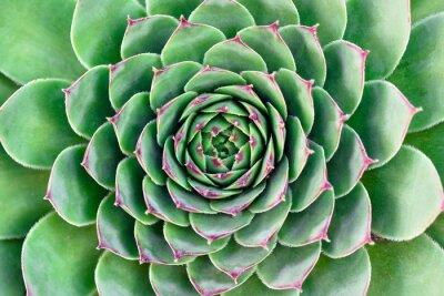 Quadro fiore verde