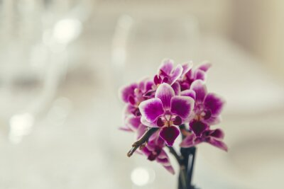 Quadro Fiore viola in fiore su uno sfondo bianco crema