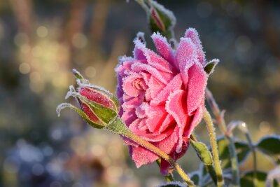 Quadro fiori 529