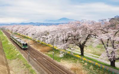 Quadro Fiori di ciliegio o Sakura e treno locale