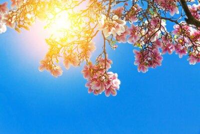 Quadro fiori di magnolia al sole