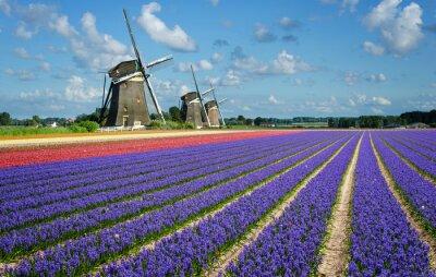 Quadro Fiori e Mulini a vento in Olanda