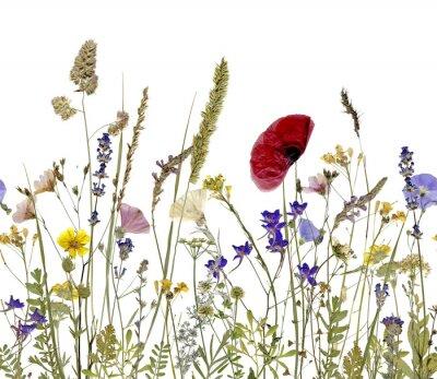 Quadro fiori ed erbe