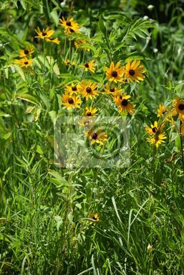 Fiori Di Campo Gialli.Fiori Gialli Dipinti Da Parete Quadri Fiori Di Campo Wildflower